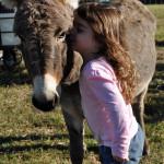 Mini Donkey on the Range