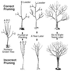 correct_incorrect_pruning